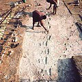 © John Reader/Photo Researchers