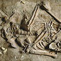 © The Natural History Museum, London
