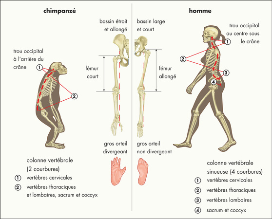 © 2012 Encyclopædia Universalis France S.A.