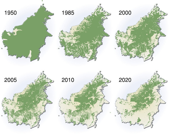 "© <a title=""Crédit"" href=""http://maps.grida.no/go/graphic/extent-of-deforestation-in-borneo-1950-2005-and-projection-towards-2020"" rel=""noopener"" target=""_blank"">H. Ahlenius, UNEP/GRID-Arendal, Maps and Graphics Library</a>"